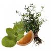 Микрокапсулы Skintex Anti-Heavy-Legs постепенно выделяют природные экстракты грейпфрута, лимона, мяты и тимьяна, которые питают и освежают кожу.